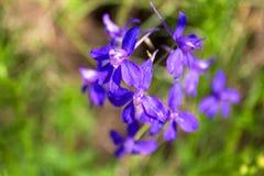 Flores violetas del campo en de gran tamaño foto de archivo