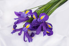Flores violetas del iris en el fondo de seda blanco imagenes de archivo