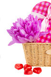 Flores violetas do açafrão para o dia de Valentim Imagem de Stock Royalty Free
