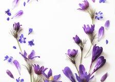 Flores violetas em um fundo branco Foto de Stock