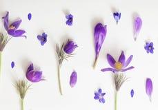 Flores violetas em um fundo branco Imagem de Stock