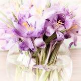Flores violetas em um vaso - açafrão Fotos de Stock Royalty Free