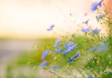 Flores violetas en el jardín del verano Fotos de archivo libres de regalías