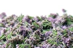 Flores violetas en un fondo ligero Imagen de archivo libre de regalías