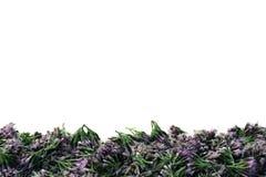 Flores violetas en un fondo ligero Foto de archivo