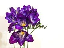 Flores violetas hermosas Fotos de archivo