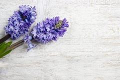 Flores violetas hermosas del jacinto en fondo de madera Imágenes de archivo libres de regalías