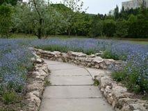 Flores violetas no parque Fotos de Stock Royalty Free