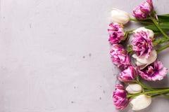 Flores violetas y blancas brillantes de los tulipanes Imagen de archivo libre de regalías