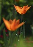 Flores vistas no parque Imagem de Stock