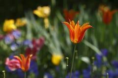Flores vistas no parque Fotografia de Stock Royalty Free