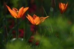 Flores vistas no parque Imagem de Stock Royalty Free