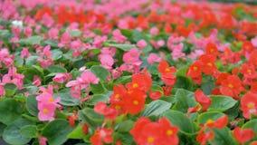 Flores vivas en soplar del jardín Invernadero creciente de la planta industrial 4K almacen de metraje de vídeo