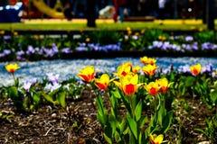 Flores vivas florecientes en uno de los parques de Moscú imagen de archivo