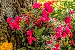 Flores votivas debajo de un árbol Fotos de archivo libres de regalías
