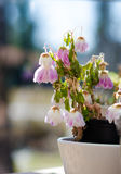 Flores Withered fotografia de stock