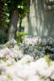 Flores y árbol imagenes de archivo