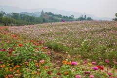 Flores y árboles de Chongqing Banan en el jardín del mundo por completo de montañas en la plena floración Gesang Hua Fotos de archivo