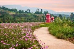Flores y árboles de Chongqing Banan en el jardín del mundo por completo de montañas en la plena floración Gesang Hua en el molino imagen de archivo libre de regalías