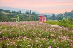 Flores y árboles de Chongqing Banan en el jardín del mundo por completo de montañas en la plena floración Gesang Hua en el molino Fotos de archivo