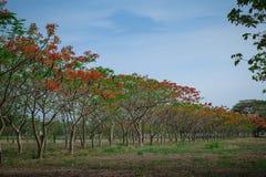 Flores y árboles naturales Foto de archivo libre de regalías