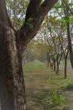 Flores y árboles naturales Imagen de archivo libre de regalías