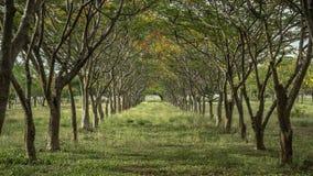 Flores y árboles naturales Fotos de archivo libres de regalías