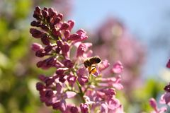 Flores y abeja Imagen de archivo libre de regalías