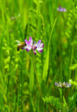 Flores y abeja Fotografía de archivo libre de regalías