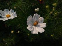 Flores y abeja Fotos de archivo