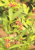 Flores y abeja de la miel imágenes de archivo libres de regalías