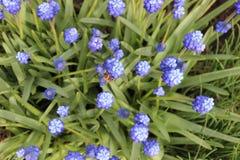 Flores y abeja de la primavera del fondo Imágenes de archivo libres de regalías