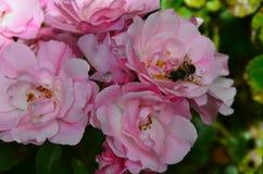 Flores y abeja en jardín Imagenes de archivo