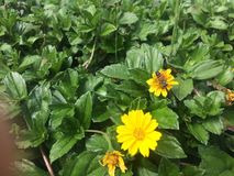 Flores y abejas Foto de archivo