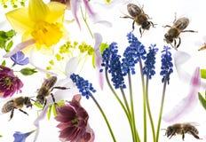 Flores y abejas de la primavera Fotos de archivo libres de regalías