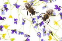 Flores y abejas de la primavera Imagen de archivo