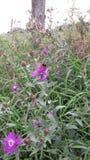Flores y abejorro Foto de archivo libre de regalías