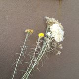 flores y adobe Imagenes de archivo