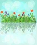 Flores y agua ilustración del vector