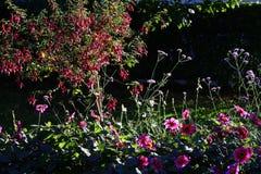 Flores y arbustos hermosos en jardín Imagenes de archivo