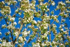 Flores y Azure Sky de la primavera Fotografía de archivo libre de regalías