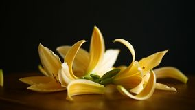 Flores y brotes amarillos del lirio