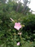 Flores y brotes rosas claros en las plantas del jardín fotos de archivo
