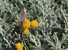 Flores y buterfly foto de archivo libre de regalías