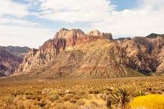 Flores y cacto del desierto de Mountain Imagen de archivo