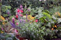 Flores y cama del jardín vegetal Imagen de archivo libre de regalías
