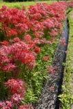 Flores y canal agrícola Fotos de archivo