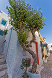 Flores y casas blancas en la ciudad vieja de Ermopoli, Syros, Grecia Fotos de archivo