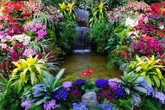 Flores y cascada Imagen de archivo libre de regalías