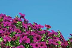 Flores y cielo Foto de archivo